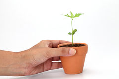 Mano che tiene una pianta del bambino Fotografie Stock Libere da Diritti
