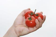 Mano con i pomodori Immagine Stock