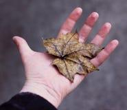 Mano con il foglio di autunno Immagini Stock