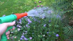Mano con il letto di fiore d'innaffiatura dello strumento dell'ugello del tubo flessibile dell'acqua nell'iarda del giardino Tenu video d archivio