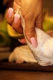 Mano con il pollo Fotografie Stock Libere da Diritti