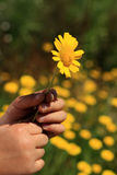 Mano con la flor Imagen de archivo libre de regalías