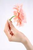 Mano con la flor Imágenes de archivo libres de regalías