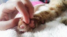 Mano con la pata de un gato fotos de archivo libres de regalías