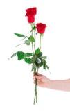 Mano con la rosa isolata su un bianco Fotografie Stock Libere da Diritti