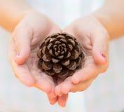 Mano con la semilla de pino Imagen de archivo
