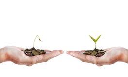 Mano con la semilla muerta y mano con la semilla creciente sobre el fondo blanco Fotos de archivo libres de regalías