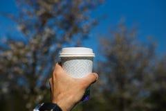 Mano con la tazza di caff? della carta - fiore di ciliegia variopinto di sakura in un parco a Riga, orientale - capitale europea  fotografie stock