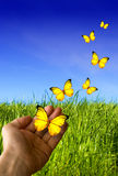 Mano con las mariposas Imagenes de archivo