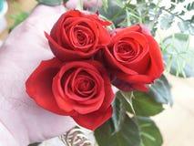 Mano con las rosas Imagenes de archivo