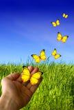 Mano con le farfalle Immagini Stock