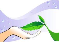 Mano con un foglio verde illustrazione vettoriale