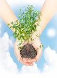 Mano con una planta Foto de archivo libre de regalías