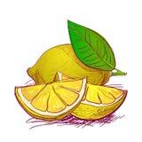 mano de la fruta dibujada stock de ilustración
