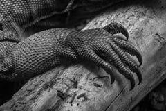 Mano de la iguana en la madera Fotos de archivo