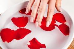 Mano de la muchacha con agua natural del tacto del color de los clavos en cuenco con el pétalo color de rosa rojo Imagen de archivo libre de regalías