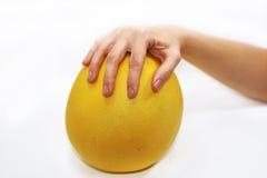 Mano de la mujer con el pomelo amarillo grande Imágenes de archivo libres de regalías
