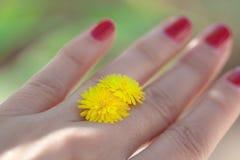 Mano de la mujer con la flor amarilla imagen de archivo