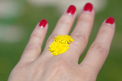 Mano de la mujer con la flor amarilla Imagen de archivo libre de regalías