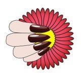 Mano de la mujer con la manicura y la flor agradables Fotos de archivo libres de regalías