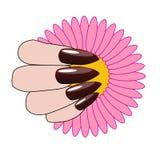 Mano de la mujer con la manicura y la flor agradables Fotografía de archivo libre de regalías