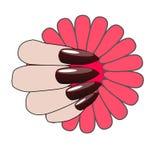 Mano de la mujer con la manicura y la flor agradables Foto de archivo libre de regalías
