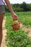Mano de la mujer joven con las fresas en cesta Imagen de archivo