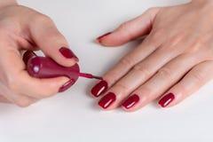 Mano de la mujer joven que aplica color rojo oscuro del pulimento de clavos en su finger con el cepillo en el escritorio blanco fotos de archivo