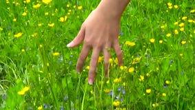 Mano de la mujer joven que corre a través del campo salvaje verde del prado, tocando el primer de las flores salvajes Tiroteo de  almacen de video