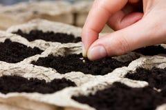 Mano de la mujer que planta la semilla en la tierra o el suelo siembra de la primavera Imagenes de archivo