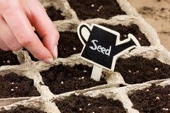 Mano de la mujer que planta la semilla en la tierra o el suelo siembra de la primavera Imagen de archivo