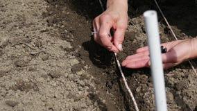 Mano de la mujer que planta la semilla en suelo almacen de metraje de vídeo