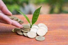 Mano de la mujer que pone la moneda del crecimiento para beneficiar finanzas foto de archivo libre de regalías