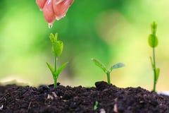 Mano de la mujer que riega a la pl?ntula en suelo completo en el fondo verde natural, concepto cada vez mayor de las plantas fotos de archivo