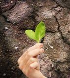 Mano de la mujer que sostiene la planta en suelo Fotos de archivo libres de regalías