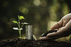 Mano de la persona que sostiene el suelo y con las monedas, planta en fondo de la naturaleza fotos de archivo