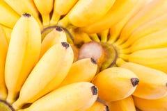 Mano de plátanos en la comida sana de la fruta de Pisang Mas Banana del fondo blanco aislada Foto de archivo libre de regalías