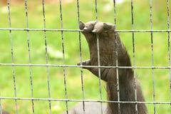 Mano de un animal de la jaula imágenes de archivo libres de regalías
