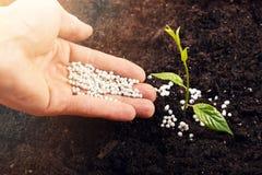 Mano de un granjero que da el fertilizante a la nueva planta verde en suelo Foto de archivo