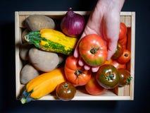Mano de una mujer joven que sostiene un tomate en el fondo de una caja de verduras frescas Imagen de archivo
