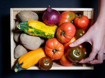 Mano de una mujer joven que sostiene un tomate fresco en una caja de verduras frescas Fotografía de archivo