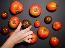 Mano de una mujer joven que sostiene un tomate fresco Visión superior Foto de archivo libre de regalías
