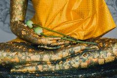 Mano de viejo Buda de oro con loto en templo tailandés Imagen de archivo