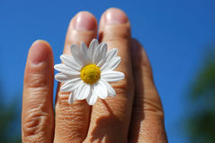 Mano del annd de la flor Imagen de archivo libre de regalías