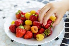 mano del bambino che prende i bio- lamponi gialli e le fragole rosse Fine in su immagine stock libera da diritti