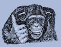 Mano del chimpancé drenada Imágenes de archivo libres de regalías