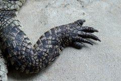Mano del coccodrillo Fotografia Stock