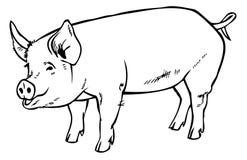 Mano del disegno del maiale Fotografie Stock