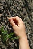 Mano del escalador que aprieta un agujero en la roca Imagenes de archivo