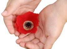 Mano del fiore Immagine Stock